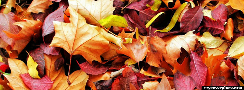 Maple leaves Facebook Cover