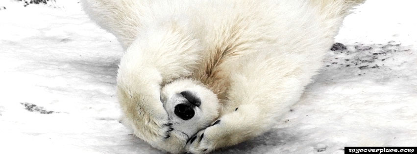 Polar Bear Facebook Cover