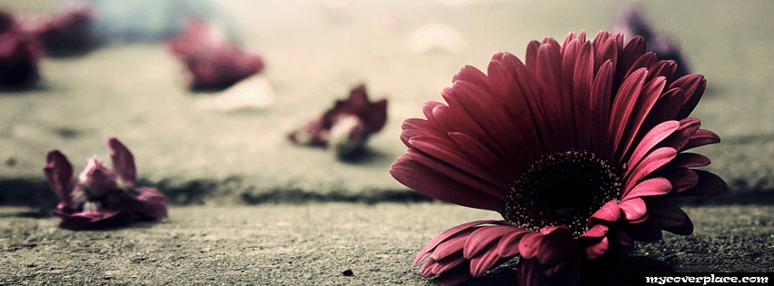 Missing petals Facebook Cover