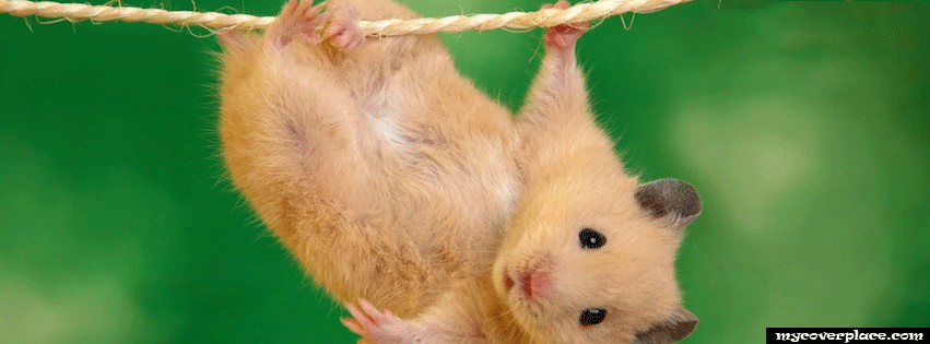 Hamster Facebook Cover