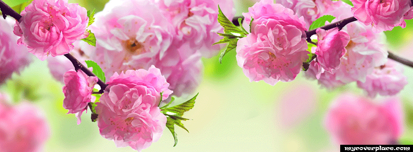Spring bloom Facebook Cover