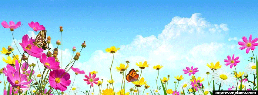 Colorful flowers Facebook Cover