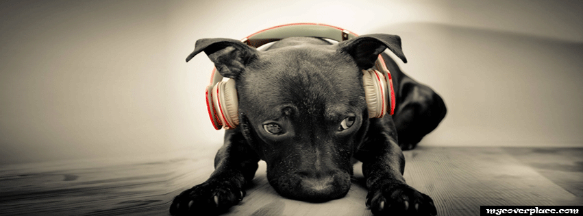Dog with headphones Facebook Cover