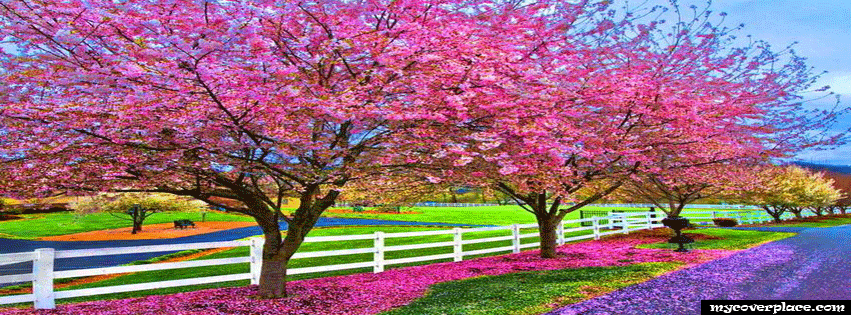 The colors of spring Facebook Cover