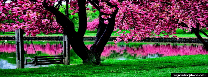 Hot pink tree Facebook Cover