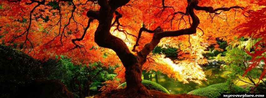 Amazing tree in the forest Facebook Cover