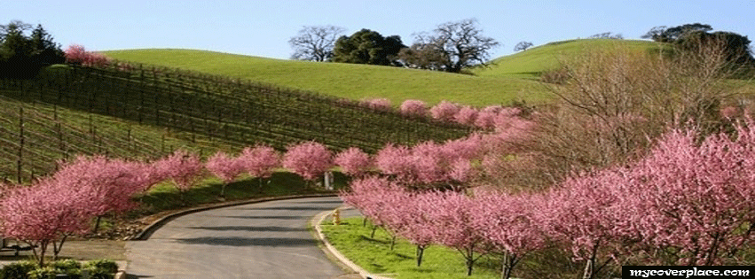 Spring on the Country Roads Facebook Cover