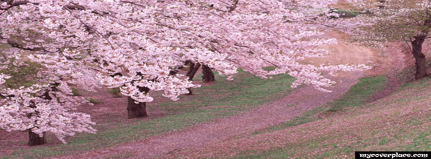 Spring Carpet Facebook Cover