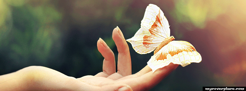 Amazing butterfly Facebook Cover