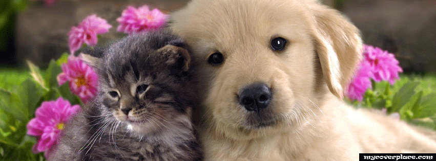 Cat and Dog Facebook Cover