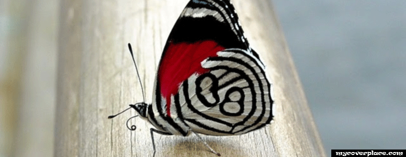 Beatiful butterfly Facebook Cover