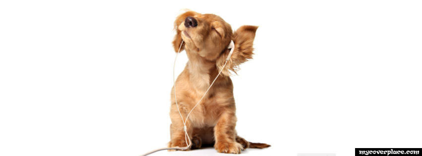 Little dog listening music Facebook Cover