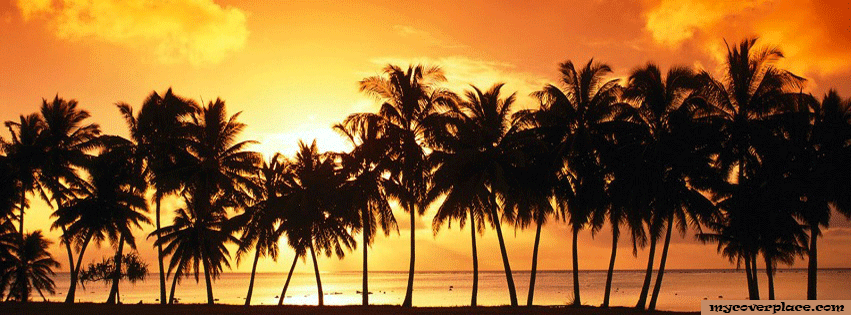 Palm tree sunset Facebook Cover