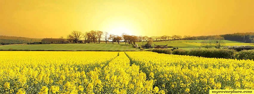 Yellow flowers Facebook Cover