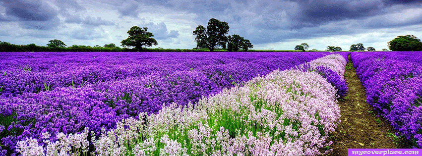 White and violet spring Facebook Cover