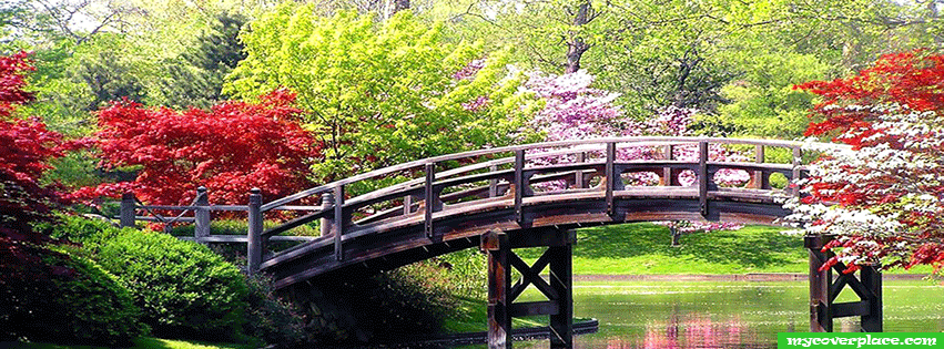 Colorful trees spring Facebook Cover