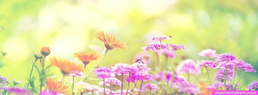 Colorful spring flowers Facebook Cover