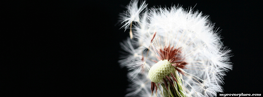 Dandelion Facebook Cover
