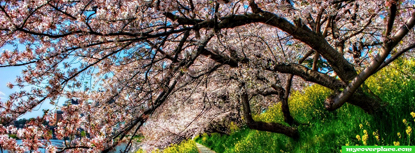 Spring blossom trees Facebook Cover