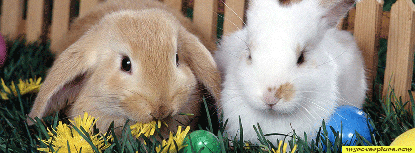 Easter Rabbits Facebook Cover
