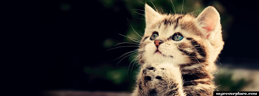 Cat Pray Facebook Cover