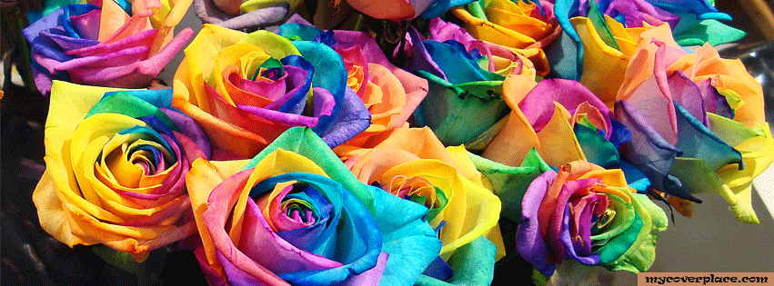 Colorful Rose Flower Facebook Cover