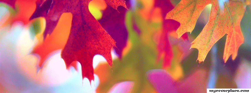 Autumn Leaves Facebook Cover