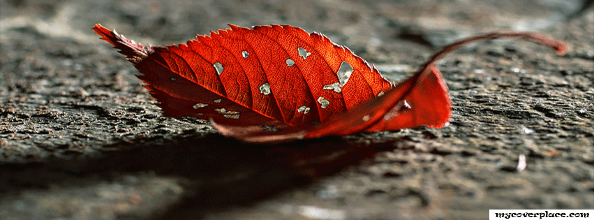 Red autumn Leave Facebook Cover