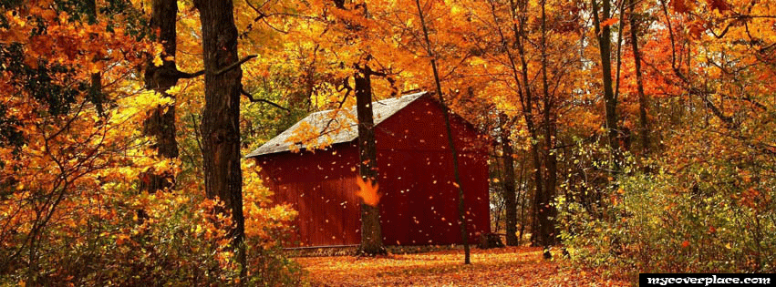 Fall Autumn Leaves Facebook Cover