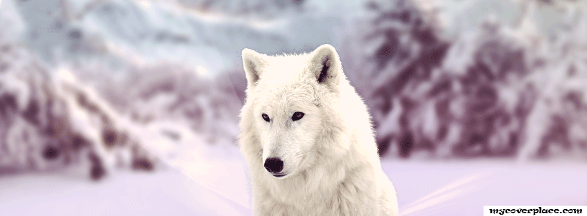 White Wolf  Facebook Cover