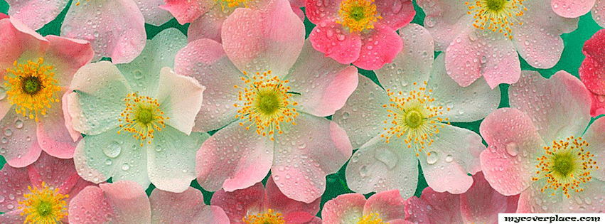 Pretty Flowers Facebook Cover
