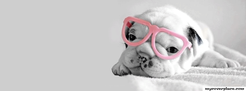Cute Puppy with pink glasses Facebook Cover